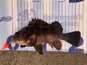 海釣り 釣り 穴釣り レジャー フィッシング 初心者 ビギナー 向け 楽しい 美味しい おいしい
