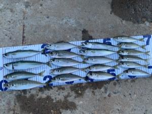 海釣り 釣り レジャー フィッシング サビキ釣り サバ イワシ アジ おいしい 美味しい