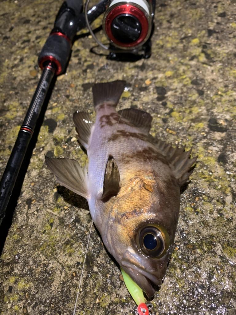 メバリング メバル 秋田 釣り 12月 1月 ハタハタ 終了後 終わった 何 釣れる