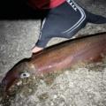 ヤリイカ 釣り方 エギング 浮き釣り 電気ウキ エサ釣り どうやる やり方
